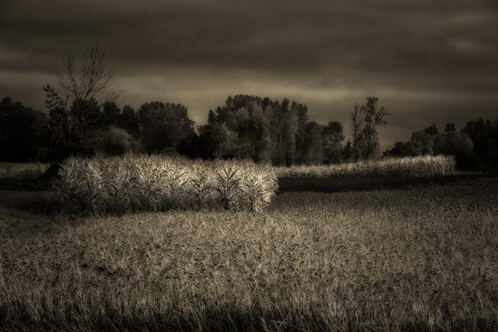 Farm, #47