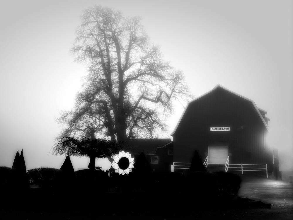 Farm, #51