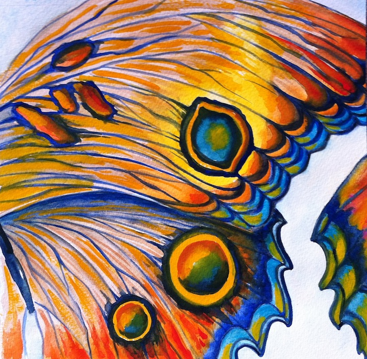 Butterflywing.JPG
