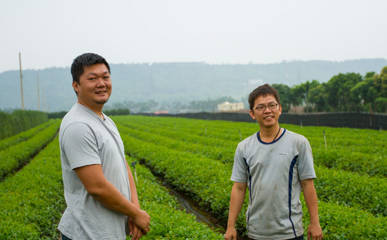 Alfredo Lin of GOE Tea in Central Taiwan