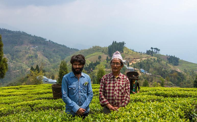 Hariyali Tea Cooperative in Ilam, Nepal