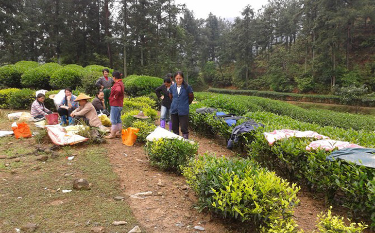 Wuyishi Rock Tea Village in Fuijan, China