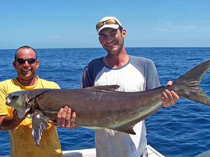 30kg Cobia caught by Frank Da Grava from Brisbane using 20 kg line on Shimano tld 20.