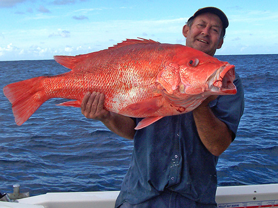 13kg Scarlett Sea Perch caught by Tony using 10kg line on a baitrunner 6500.