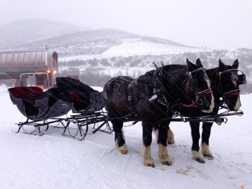 Image source: http://www.dadlogic.net/wp-content/uploads/2014/03/Canyons-Resort-Sleigh-Ride.jpg