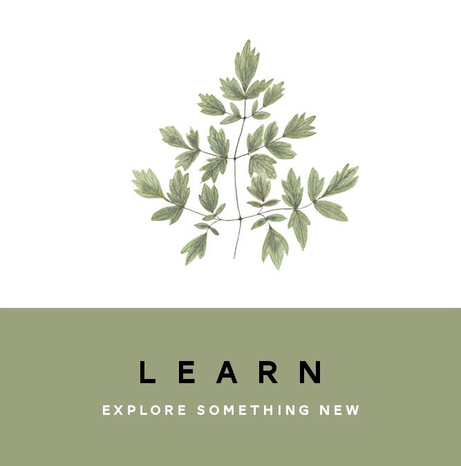 HOME - learn button FLAT.jpg