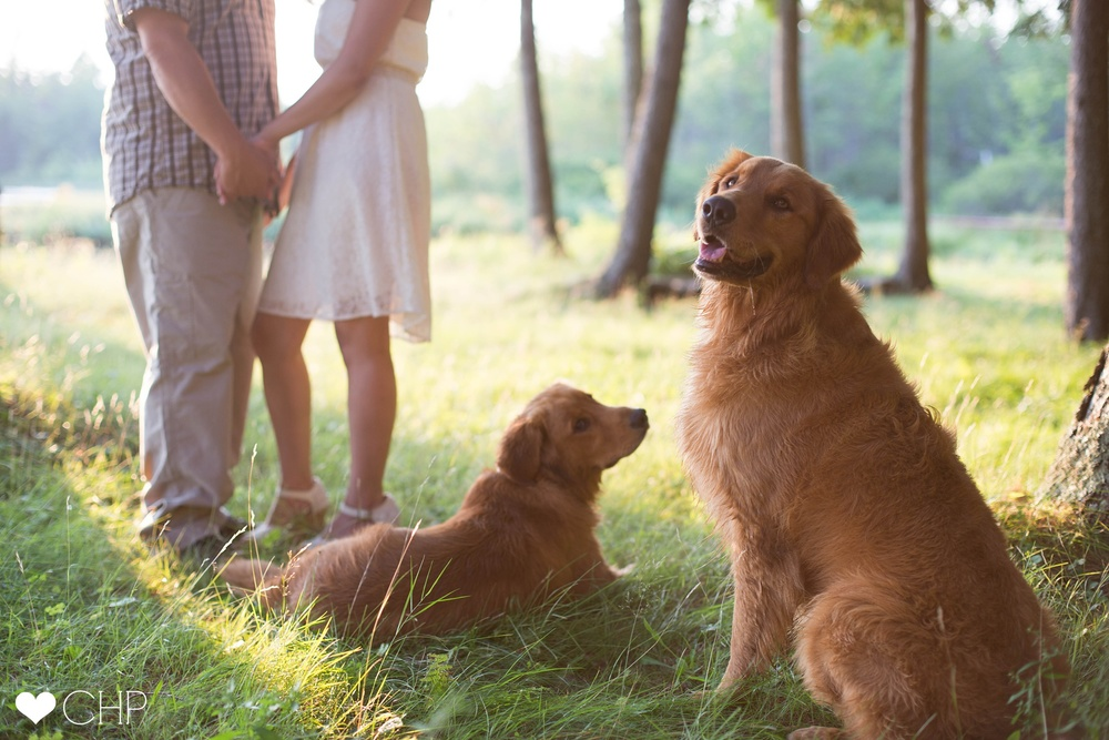 Maine-Engagement-Session-With-Dogs