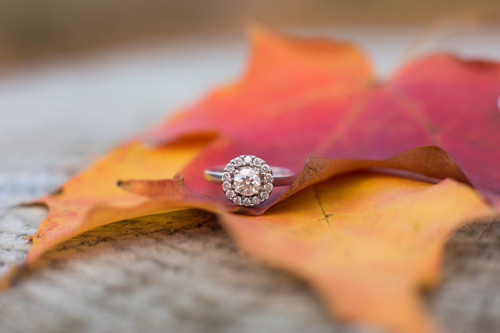 Fall foliage ring shot