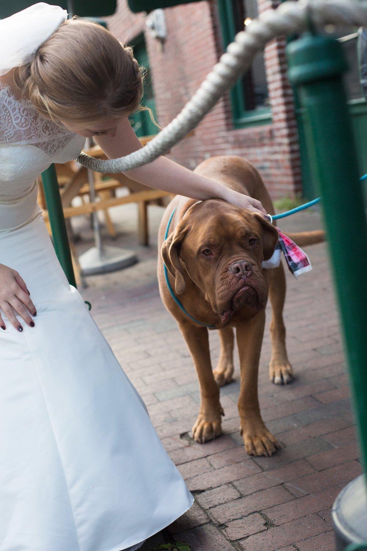 bride with bulldog