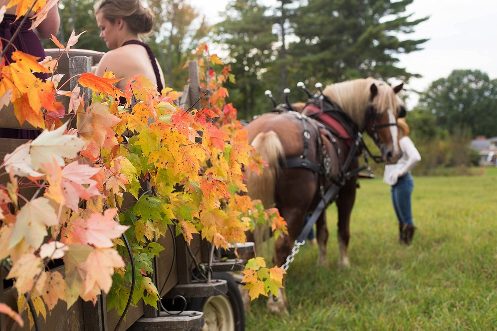 fall wedding horse carriage