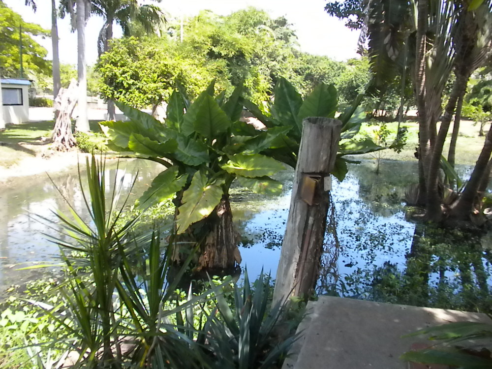 The Botanical Gardens Cuidad Boliviar.