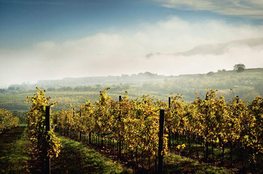 WAS IST BIO-WEIN? - INTERSPAR Weinwelt