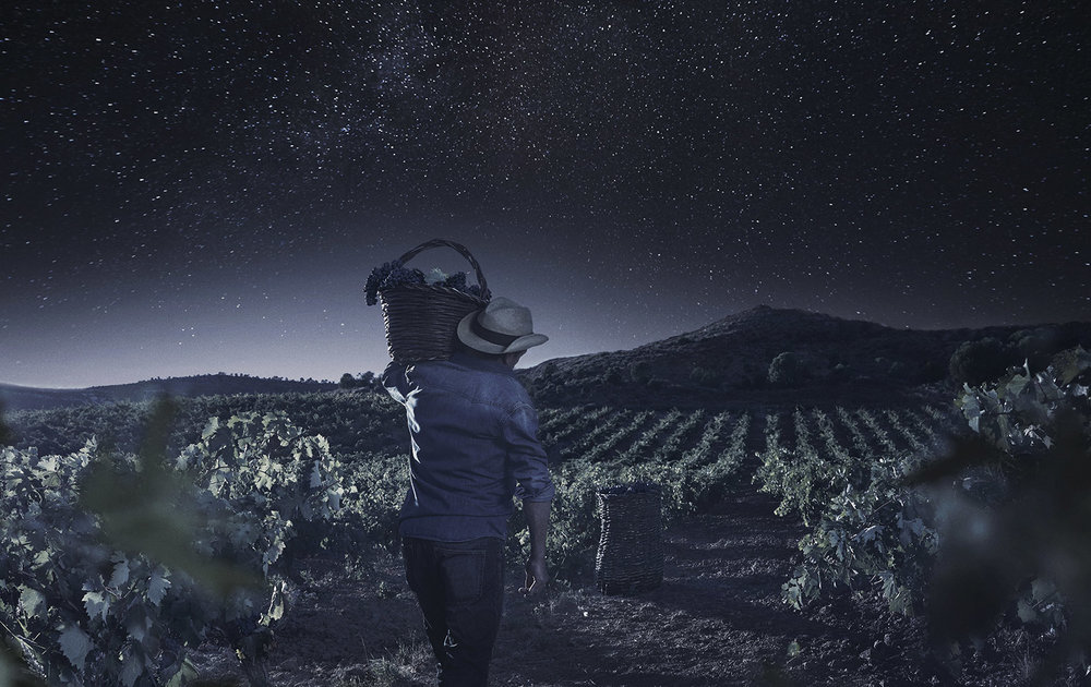 CELESTE WINE - TORRES - RIBERA DEL DUERO