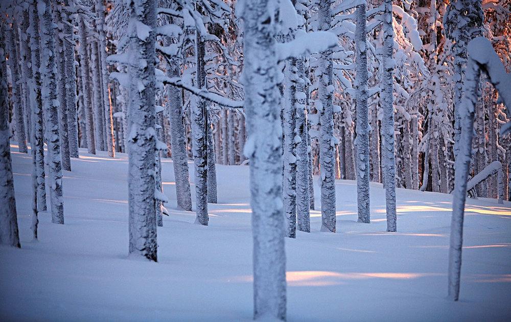 Lapland_travels_©PepAvila.181.jpg