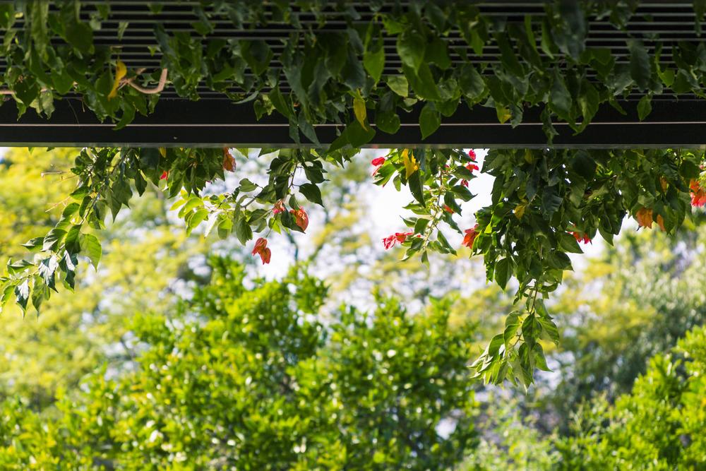 Detail Garden.jpg