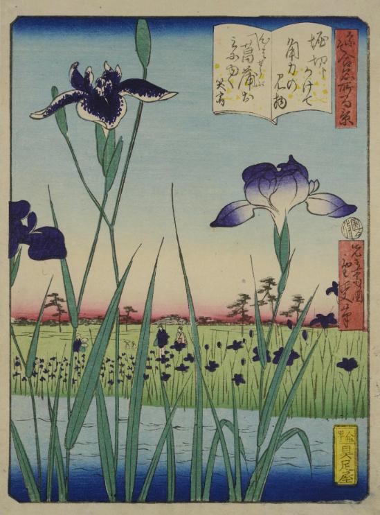 Colour woodblock print, from the series Nazo ai meisho hyakkei (Mystery One Hundred Famous Views), depicting irises in the Horikiri garden, Edo: Japan, by Shigenaga, 1866  © National Museums Scotland