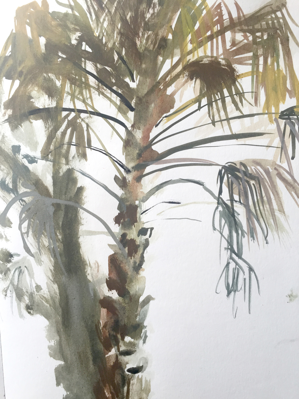 Dilli Village palm