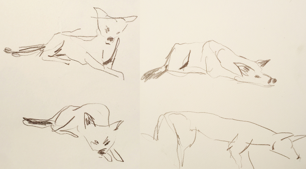 Dingo sketches drawn from the car on the beach