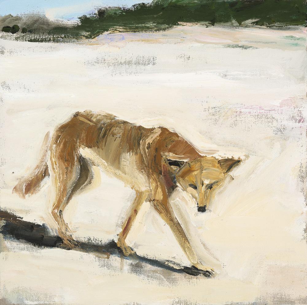 Dingo #1