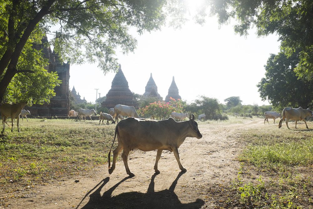 Oto_SP_Burma7.jpg