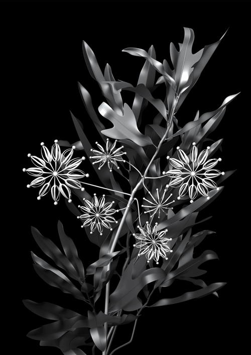 constructive_botanics/stenocarpus_01(firewheel)  Limited Edition (A1) x  20   840mm H x 595mm W  Giclée print on 188gsm Hahnemühle photo rag paper  $950 AUD (unframed)  CODE  S01