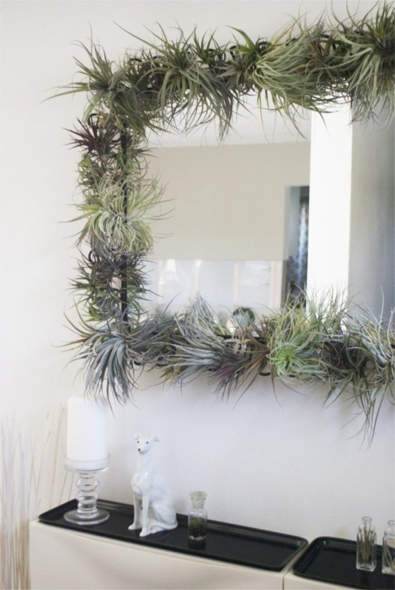 Tillandsia air plant wall mirror