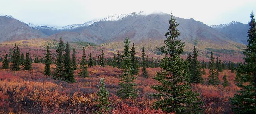 Cover some incredible terrain on the Tundra Wilderness Tour.