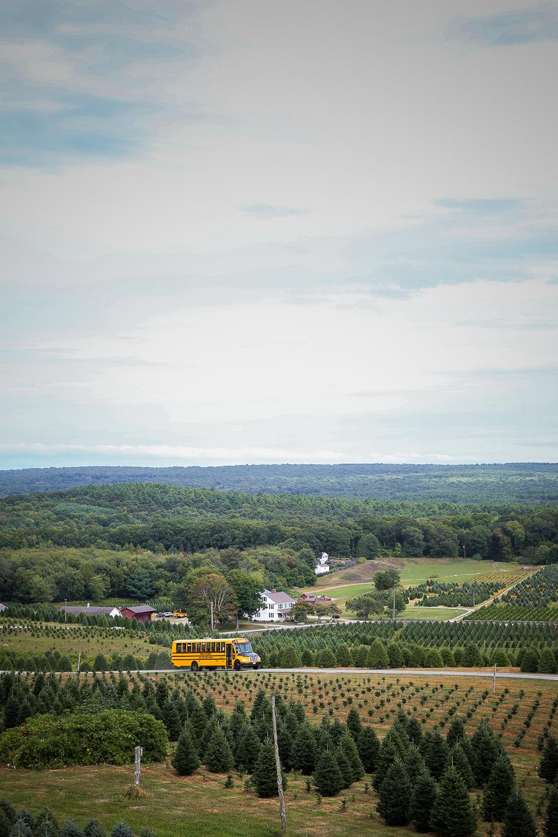 treefarm-11.jpg