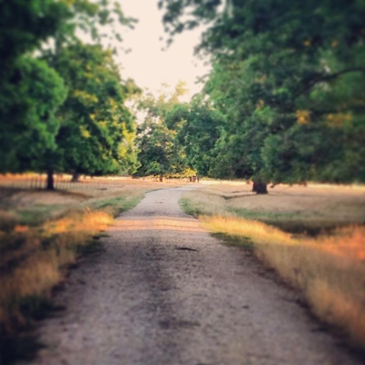 instagram road.jpg