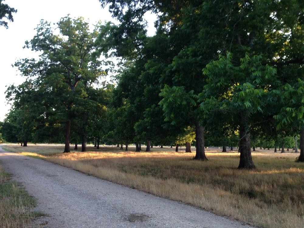 Road in trees.jpg