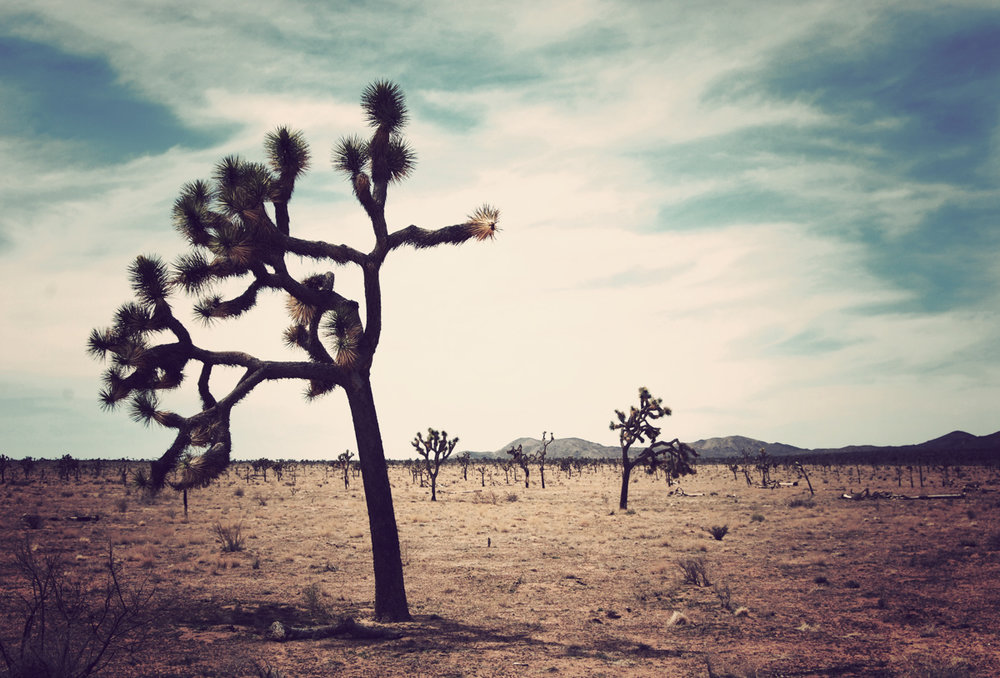 Joshua Tree, CA.