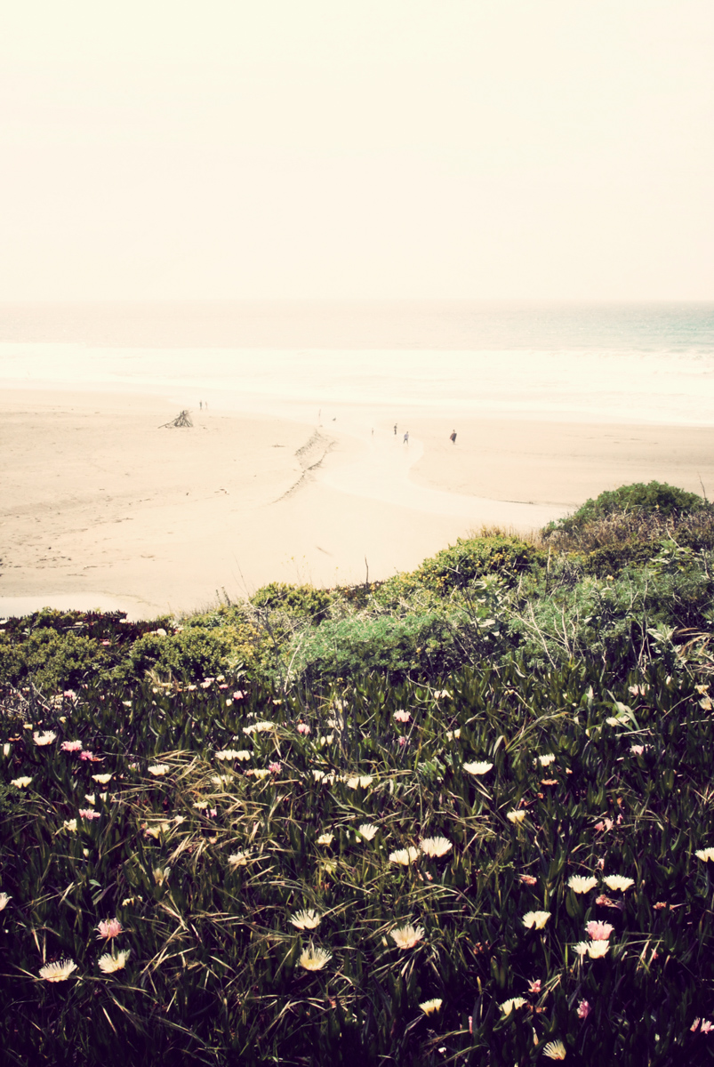 Bodega Bay, CA.