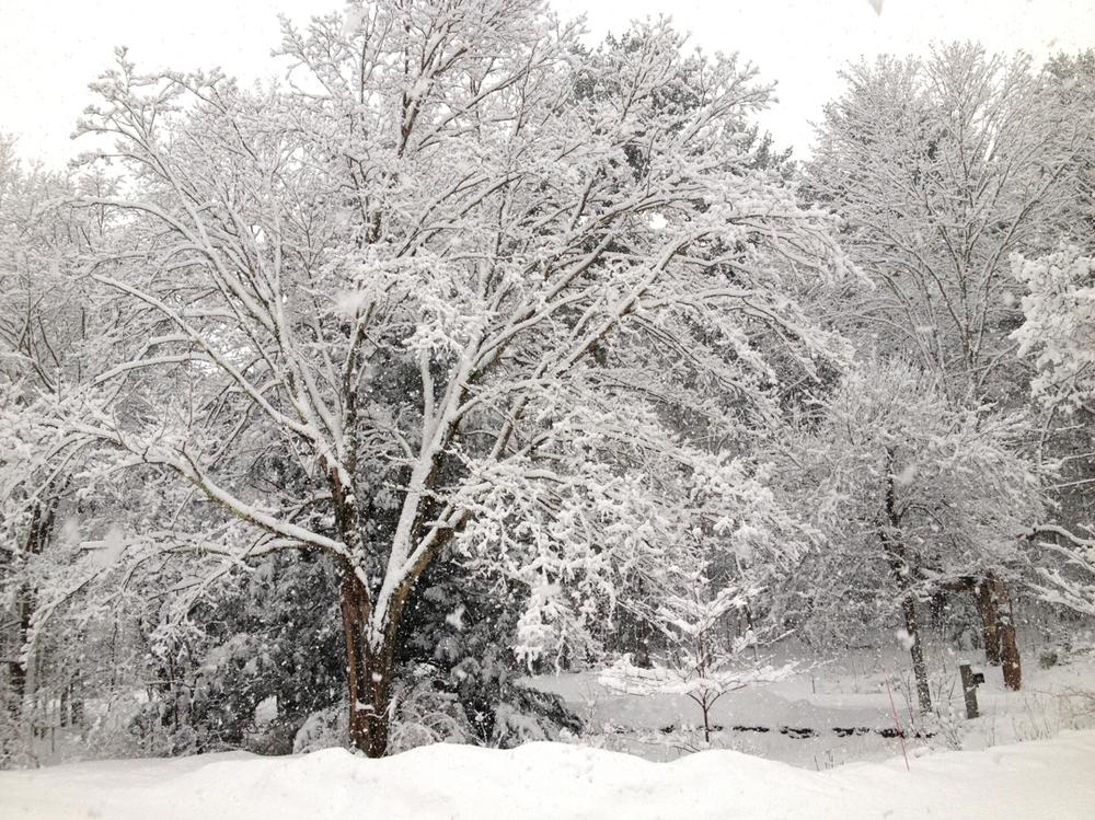 Snowstorm #1