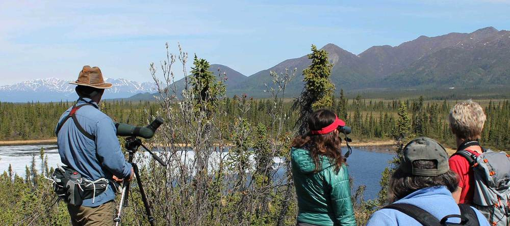 Birding at a lake along the Nabesna Road