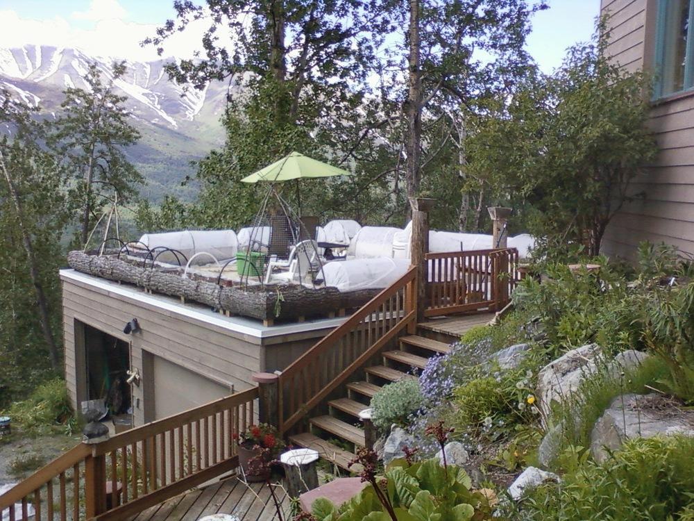 Cindee's permaculture roof garden