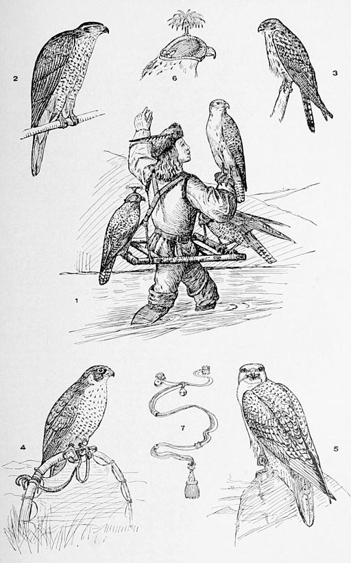 Falconry Illustration  By unknown artist [Public domain], via Wikimedia Commons