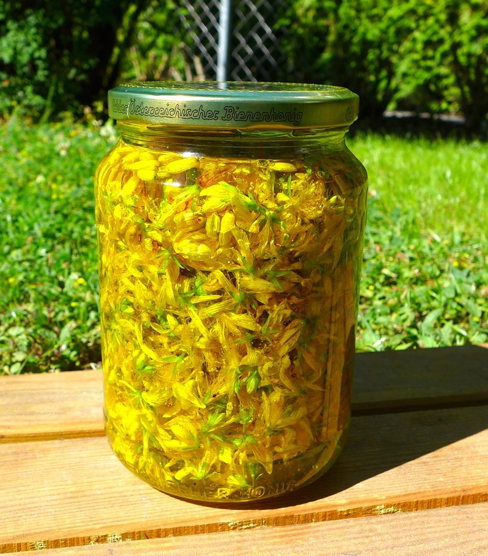 Frisch angesetztes Johanniskrautöl. Als Basisöl wurde kaltgepresstes biologisches Mandelöl verwendet.
