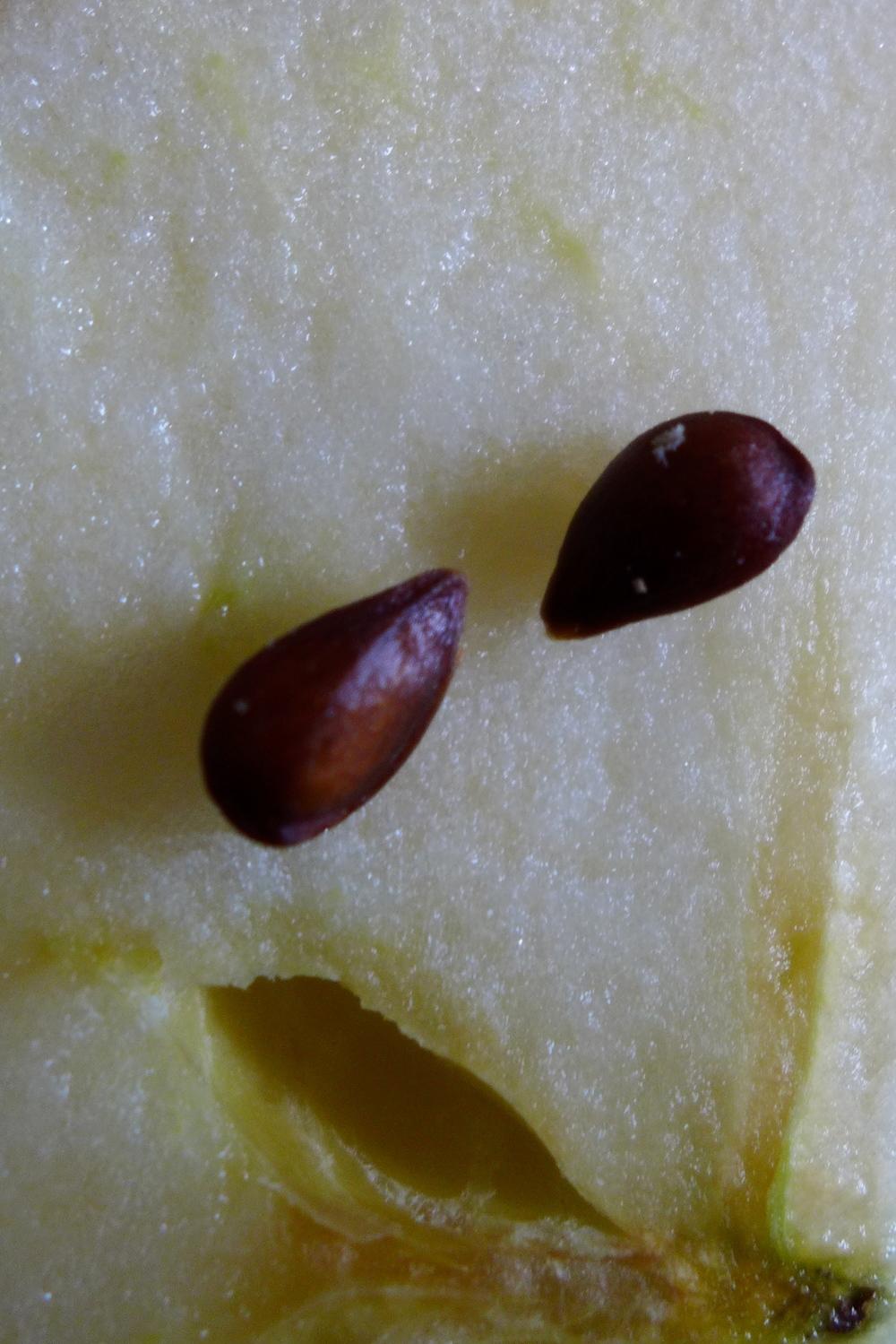 Zwei Apfelkerne vorsichtig aus dem Putz ausstechen und beiseite legen. Die Apfelkerne werdenals Augen verwendet.