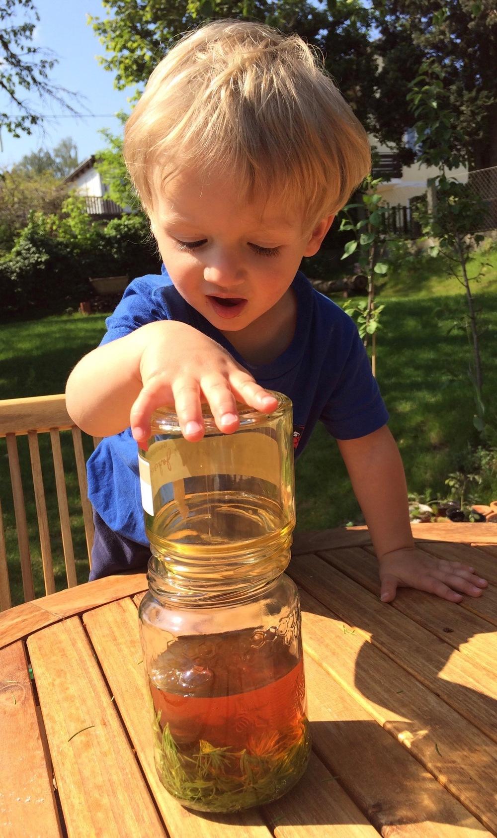 Die Qualität des Honigs spielt eine wichtige Rolle. Es loht sich daher einen Imker aus Leidenschaft aufzusuchen der seine Bienen schätzt und nicht ausbeutet. Wenn du dein Glas halbvoll mit Wipferl gefüllt hast, dann gib soviel Honig dazu bis es voll ist.
