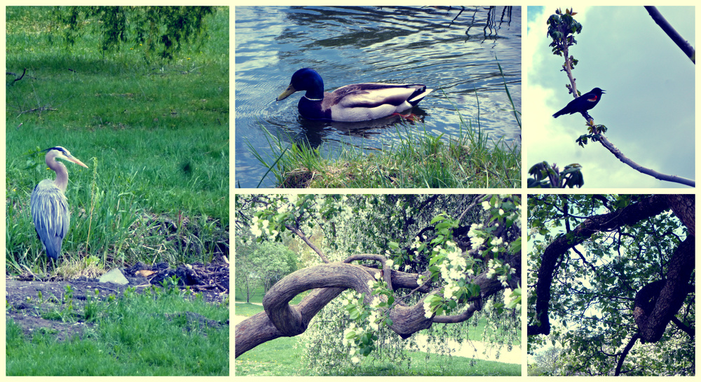 Ottawa Arboretum. Fowl & foliage.