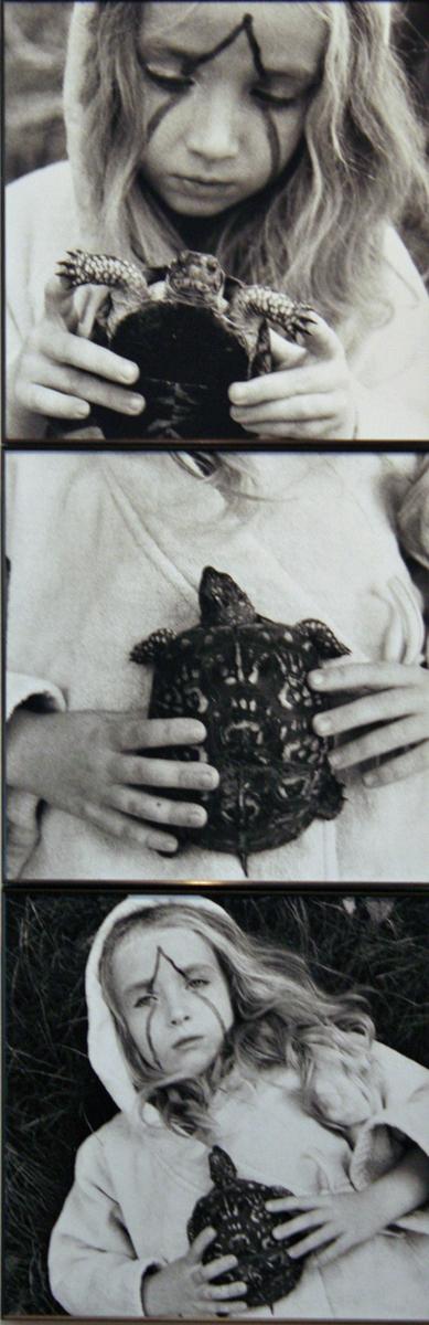 VII (Turtle Triptych)