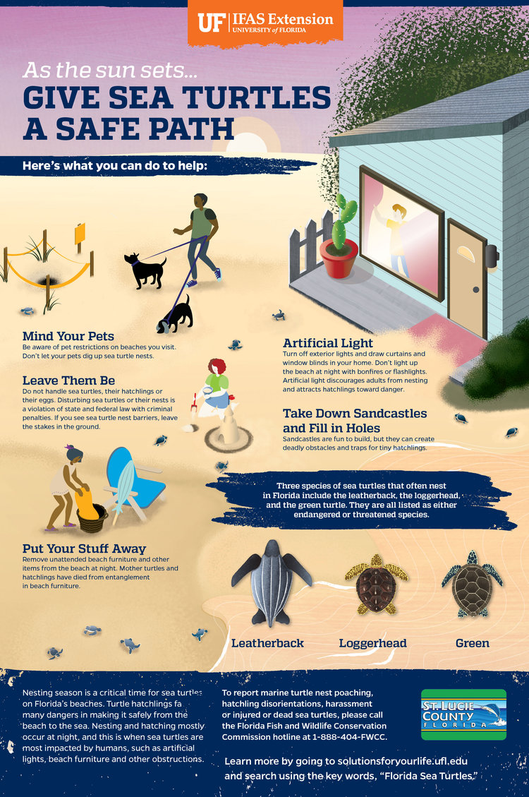 Sea+Turtle+Infographic+revised+2-13+for+print.jpg