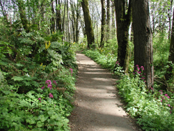 forest_wildwood.jpg