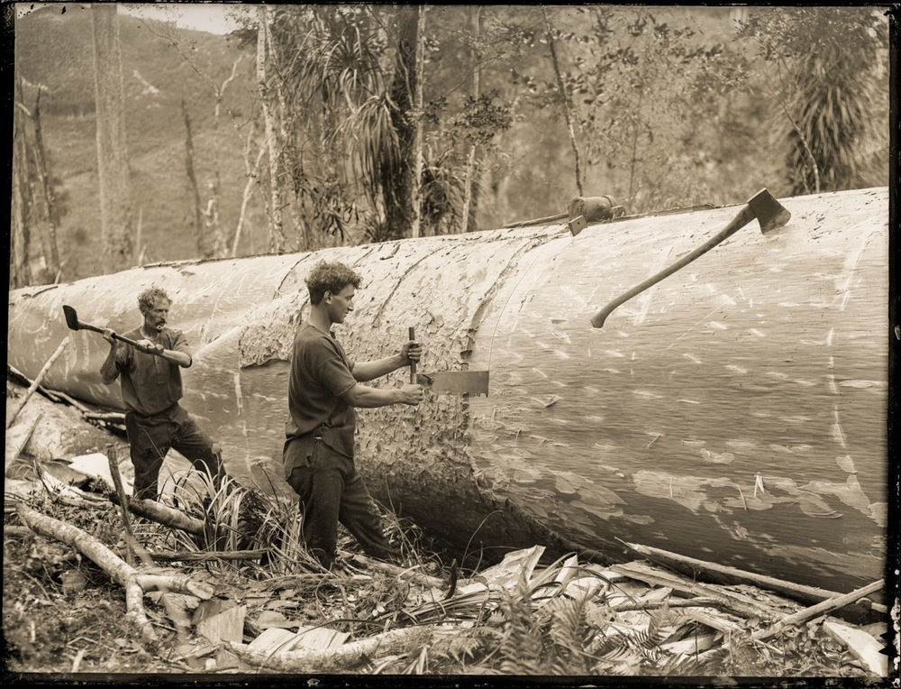 Timber workers cutting up a kauri log with a crosscut saw and axes