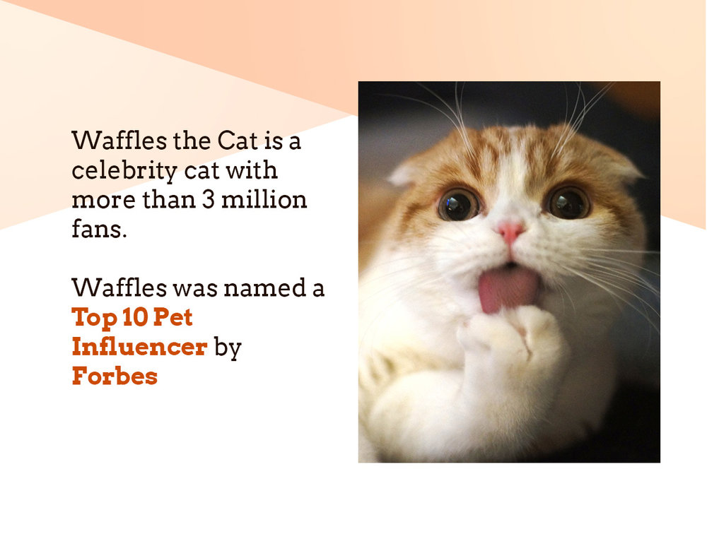 Waffles is a celebrity cat with more than 3 million fans. waffles is a forbes top 10 influencer