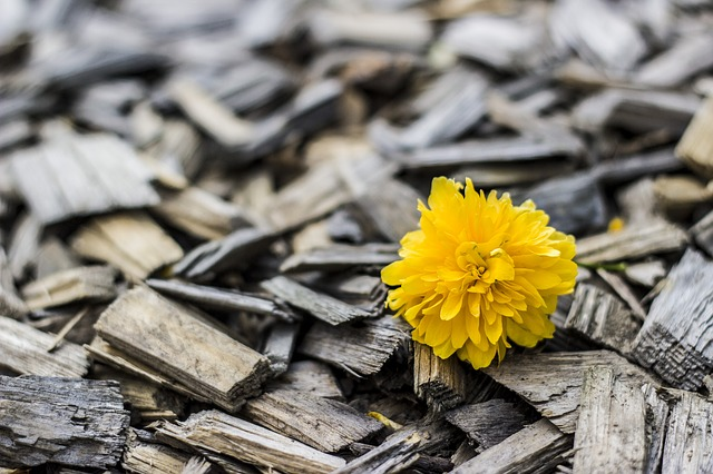 Flower-Yellow-Wood-370256.jpg