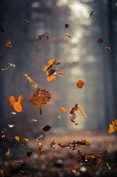 Source: http://www.lovethispic.com/image/36213/leaves-in-the-wind