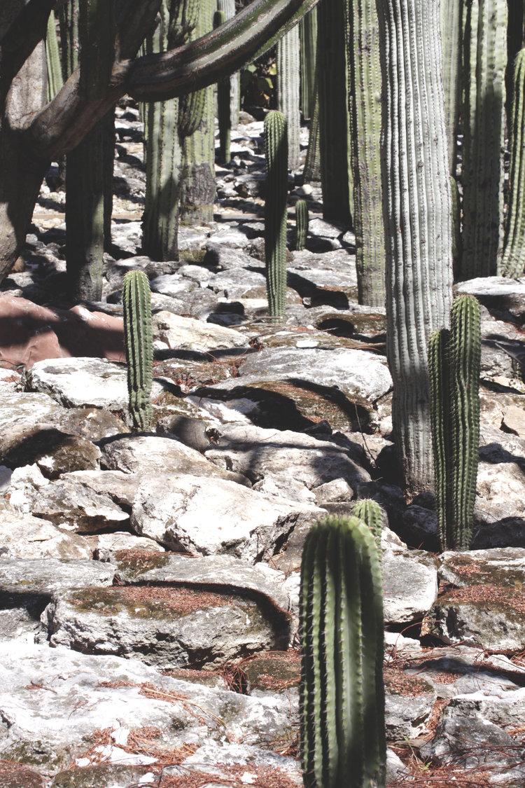 Rebecca+Mir+Grady+Oaxaca+Cactus.jpeg