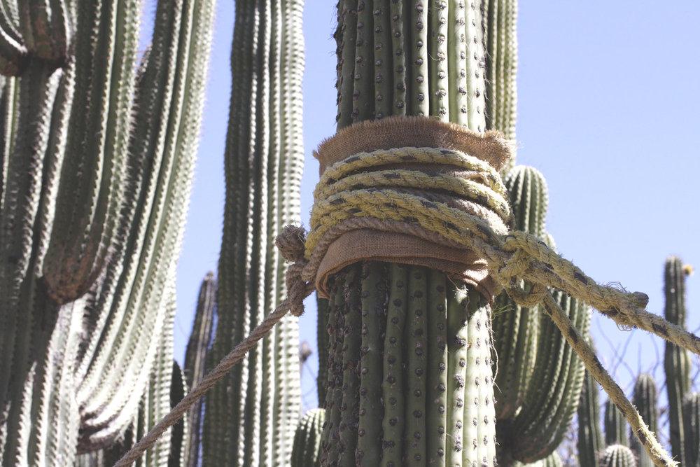 Rebecca+Mir+Grady+Oaxaca+Cactus+Support.jpeg