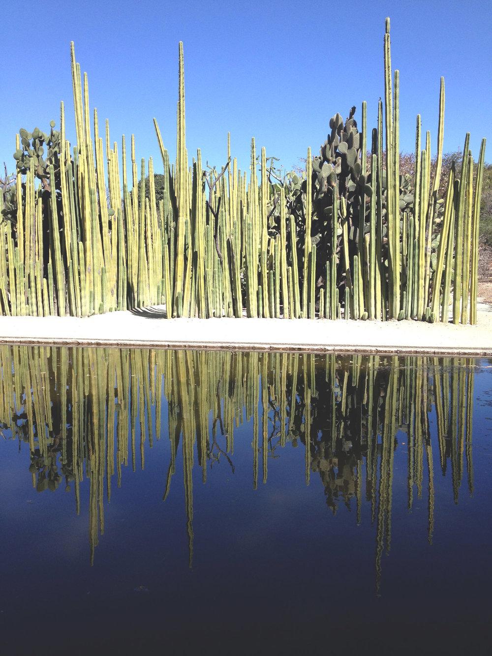Rebecca+Mir+Grady+Jardin+Etnobotanico+Oaxaca.jpeg